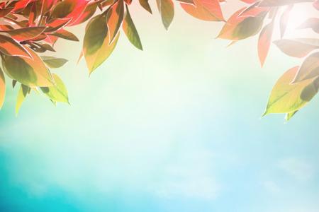 Vroege herfst DAYSWITH rode bladeren als achtergrond Stockfoto