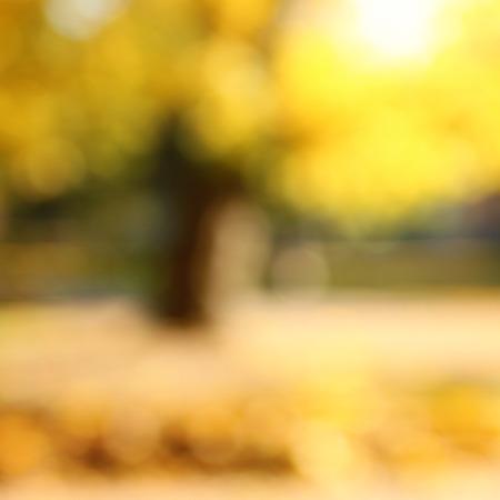 ate: Sunny ate autumn park, defocused background Stock Photo