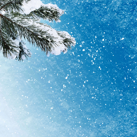 spruce: Bunch of the fir tree on winter background Stock Photo