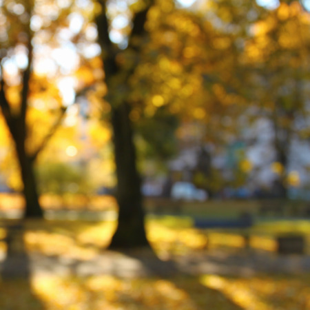 gold colour: Blurred defocused background of autumn park in sunlights