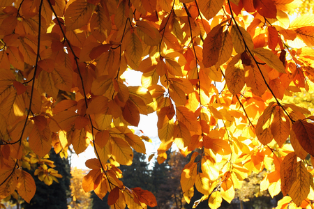 Autumn leaves in park Stock Photo