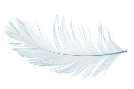 Elegant violet feather on white background