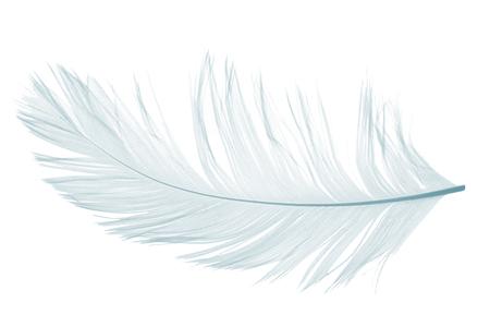 Elegant violet feather on white background
