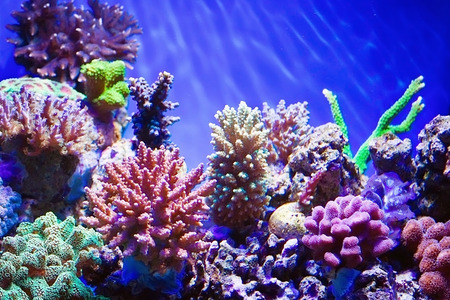 bahama: Coral reef aquarium