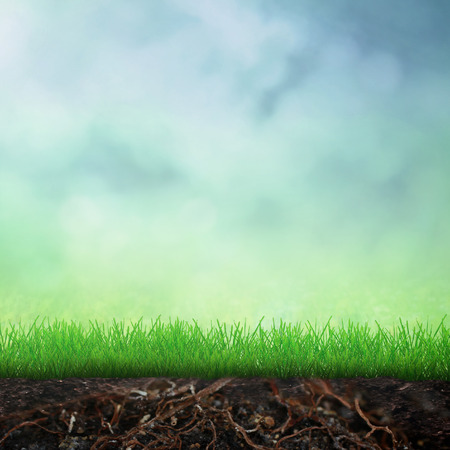 plant nature: Spring with growing grass in soil