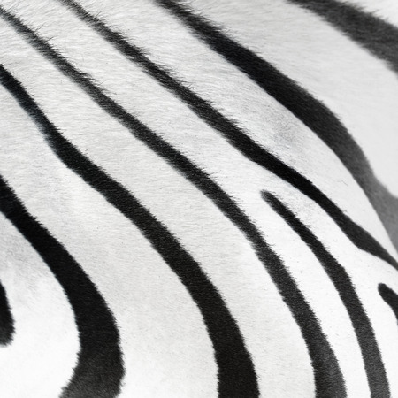stipe: Skin of the zebra as background Stock Photo