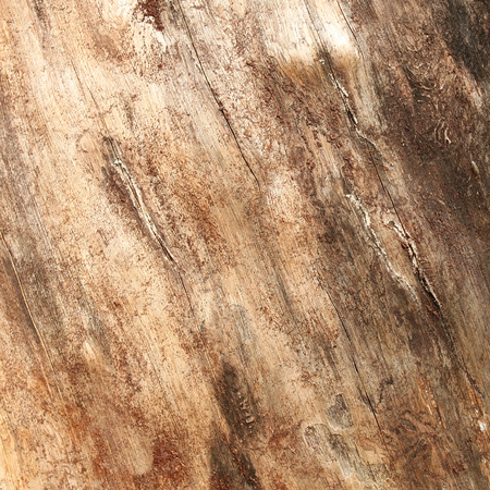 wooden surface: Wooden trunk surface
