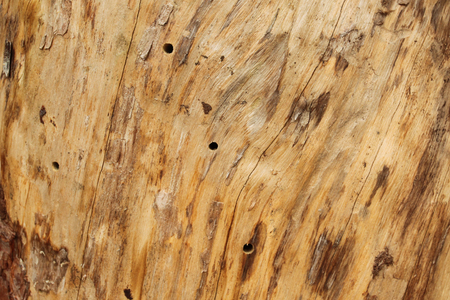 wooden surface: Wooden trunk as surface