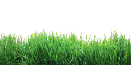 新鮮な草を成長