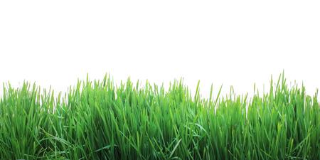 성장하는 신선한 잔디