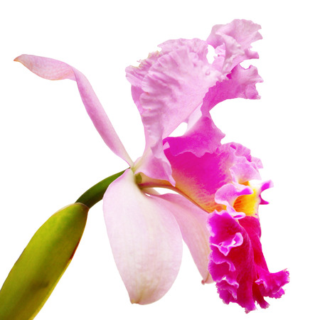 beautiful flowers: Violet orchid in profile Stock Photo