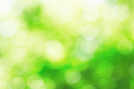 Sunny abstract growing nature background with soft focus