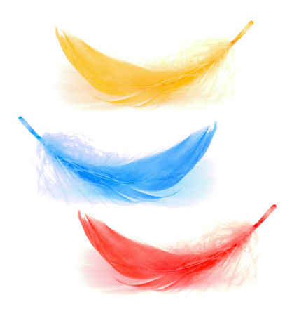 Two red and blue  feather on the white background Stock Photo