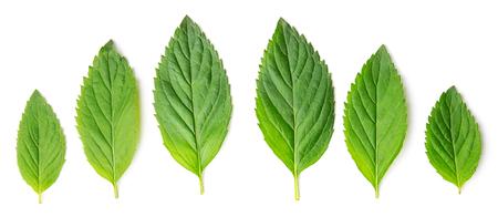 Top view of mint melisa leaves