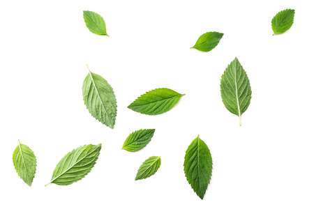 Flying mint leaves over white background