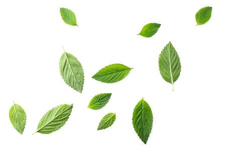白い背景の上に飛ぶミントの葉