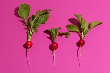 Three different radishes as pattern background Imagens