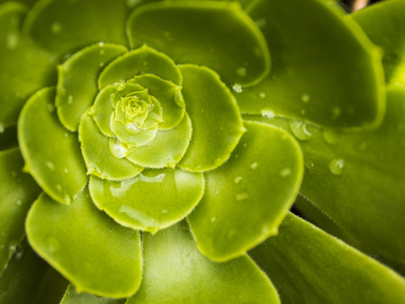 cactus flower: Succulent plant Stock Photo