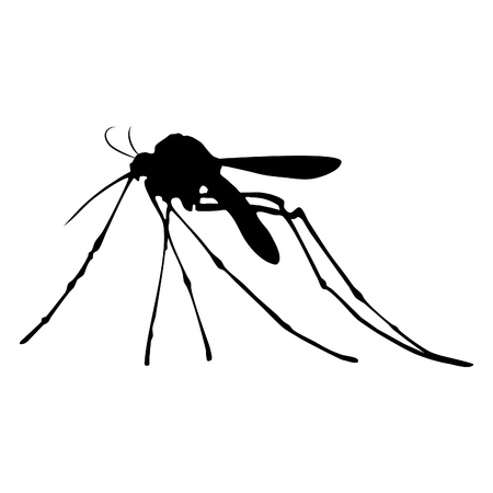 Silhouette of mosquito isolated on white background.
