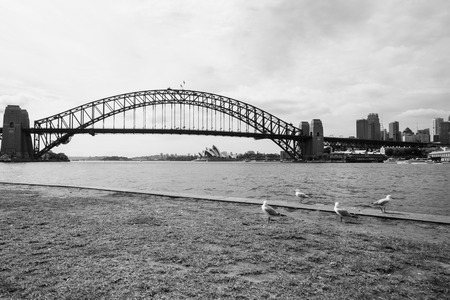 peddle: Birds staring at Sydney Harbor Bridge and Opera House Stock Photo