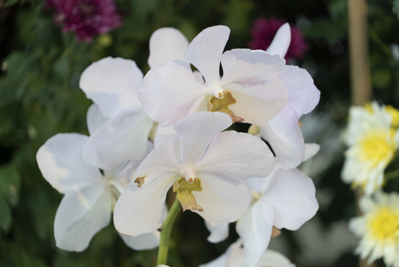 Colourful tropical flower, close macro selective focus.