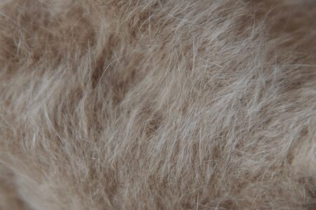 beige and white wool close-up