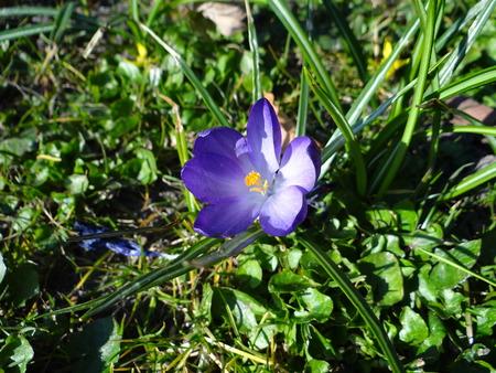 purple flower: Purple flower Stock Photo