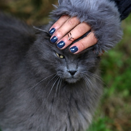 eye: Touching gray cats head with gray winter gloves