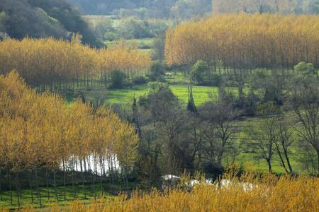 yellow trees: Yellow Trees Stock Photo