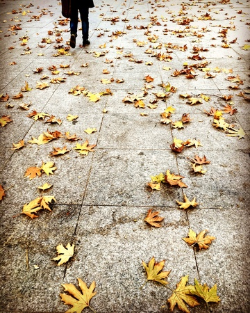 Yellow autumn leaves on the pavement in a rainy day