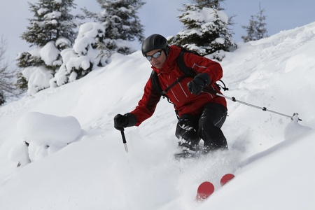 off piste: Male freerider is skiing downhill between fir trees