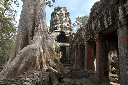 Temple of  Angkor Thom with typical ficus tree photo
