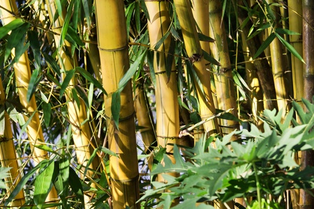 undergrowth: Tropical bamboo undergrowth in asia Stock Photo