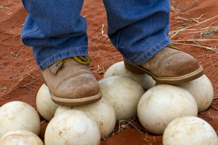 hardness: Man stands on ostrich eggs to show how hard the shell is