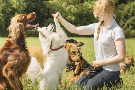 obedecer: Adiestrador de perros pomeranian entrena a sentarse y rogar