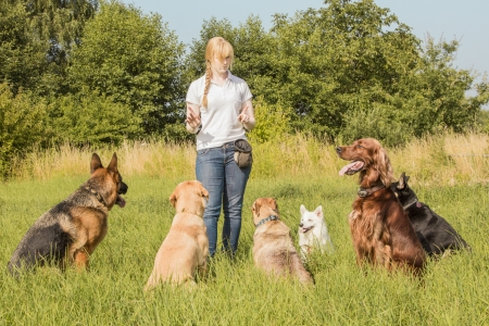 A group of dogs listen to the commands of the dog trainer photo