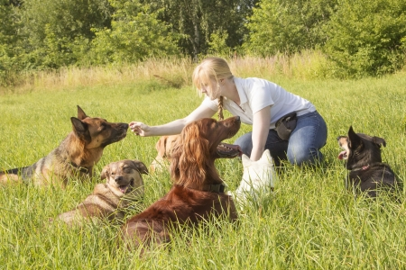 Female dog trainer feeds a dog  with goodies after training