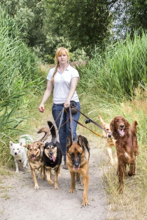 several: Professional dog walking service of a female service provider