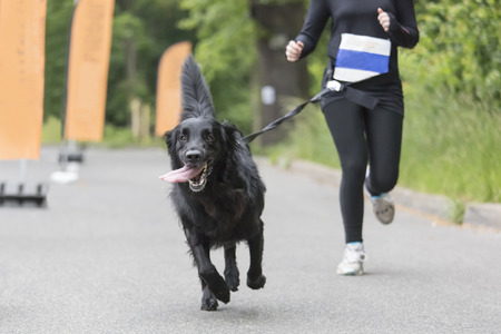 pet leash: Dog and his owner are running together at a running event