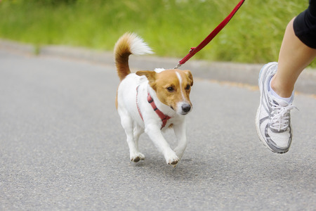 dog leashes: Dog and his owner are running together at a running event