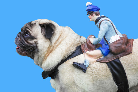 Pug dog with rubber puppet rider on blue background photo