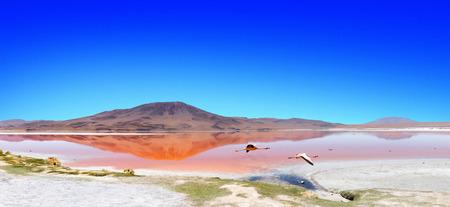 """animales del desierto: Panorama de una laguna en la  """" Ruta de las Joyas altoandinas"""" en Bolivia con flamencos rosados ??que pescan en el lago. En el primer plano volar flamencos que cruzan la escena."""
