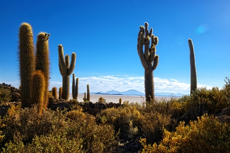 incahuasi: Atmospheric HDR shot of a cactus Incahuasi hill at the Uyuni desert in Bolivia
