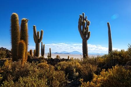 incahuasi: Atmospheric HDR shot of a cactus Incahuasi hill at the Uyuni desert in Bolivia