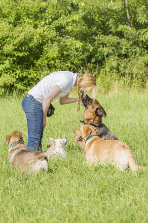 commands: German shepherd with ears back listens to the forceful commands of the female dog trainer. A group of other dogs surround the scene. Focus is on the woman and the shepherd. Stock Photo