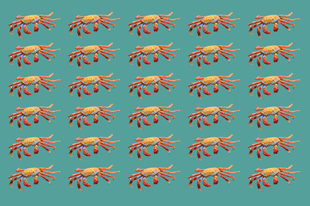 marine crustaceans: Uniform pattern of red crabs on turquoise background