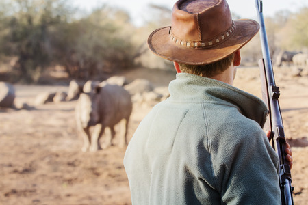 ranger: Ranger with firearm stands face to face with rhino and watches the behavior of the rhino. Stock Photo