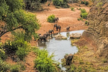 Słonie wody pitnej na punktu widzenia Red Rock w parku narodowym Krugera