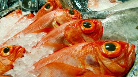 Row of redfish lies in surrounding crushed ice.
