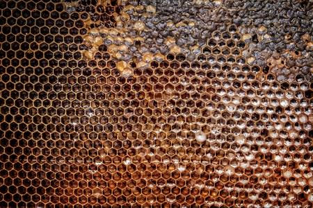 natural looking: Natural looking honeycomb with honey drops.